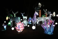Festival of Light opened at Kalemegdan marking Chinese New Year