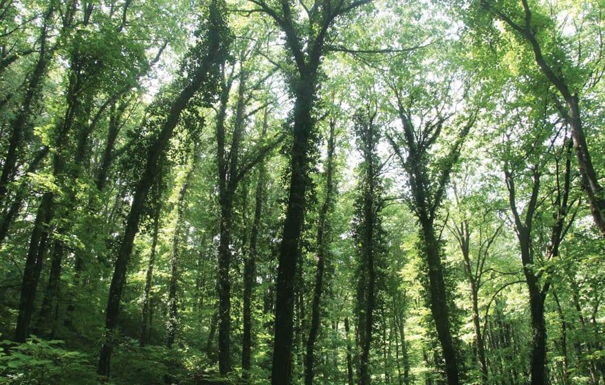 GEF Grant Targets Serbian Forests