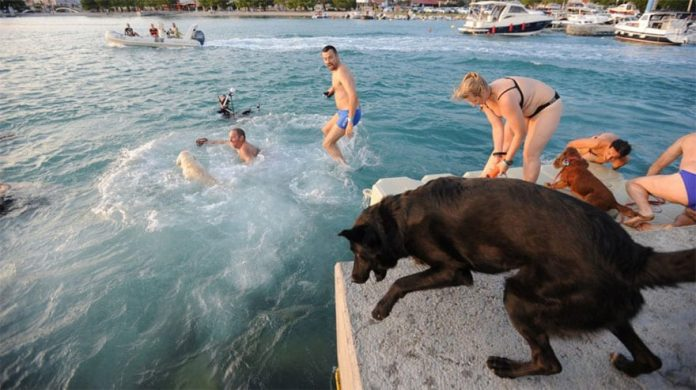 Croatia's Beach Just For Dogs