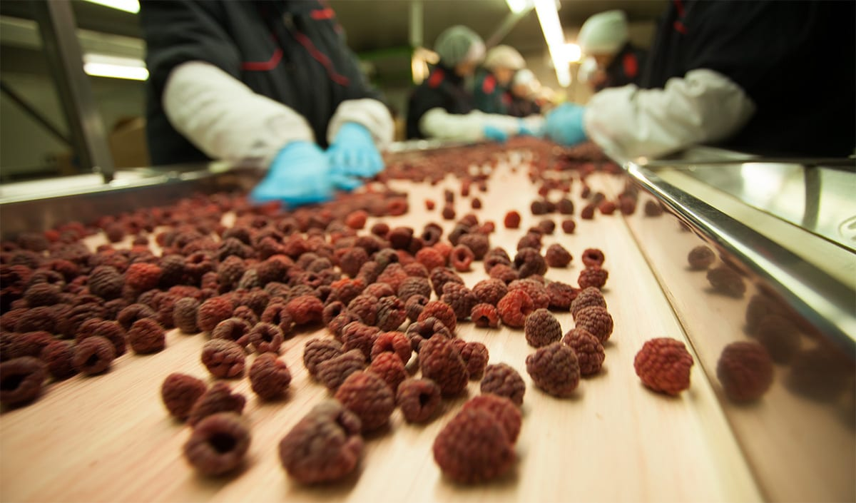 German Companies Interested In Serbian Organic Frozen Fruit