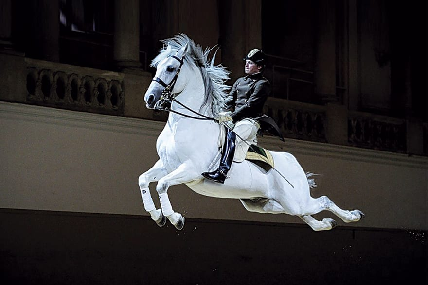 Spanish Riding School Vienna, Traditions That Last Over 450 Years