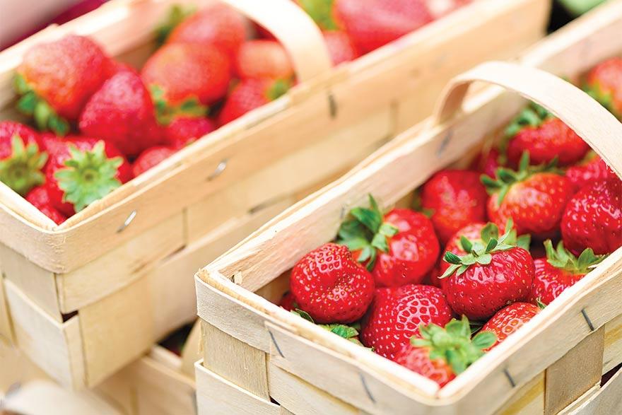 Pandemic Threatens Croatia's Strawberry Farmers