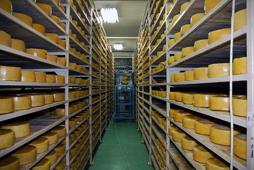 Mlekoprodukt izvoz EU Kina sirevi